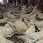 Bags and bags of uncracked nutmeg